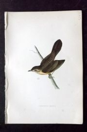 Morris 1870 Antique Bird Print. Grasshopper Warbler